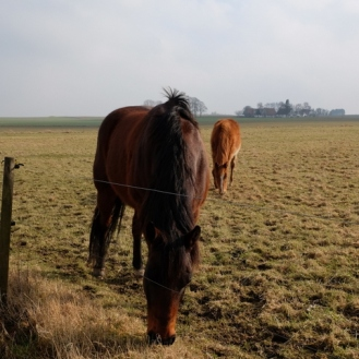 14-heste der græsser