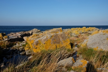 17-bornholm gule klipper